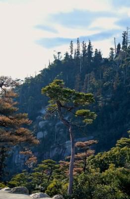 View of the summit Mt Missen