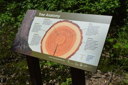 Tree Anatomy Sign