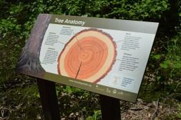Tree Anatomy Sign