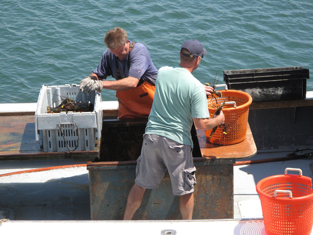 Lobster men unloading