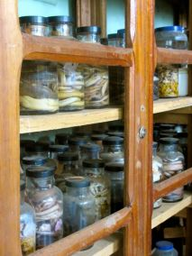 Jars and jars of snakes