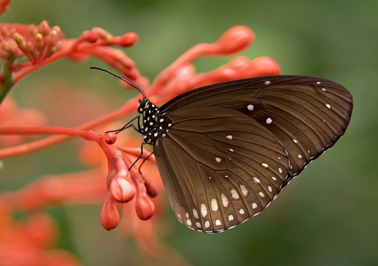 butterfly, life transitions, Peek Counseling