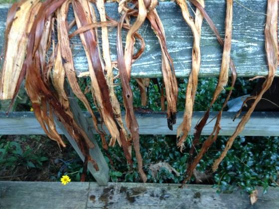 drying cordage
