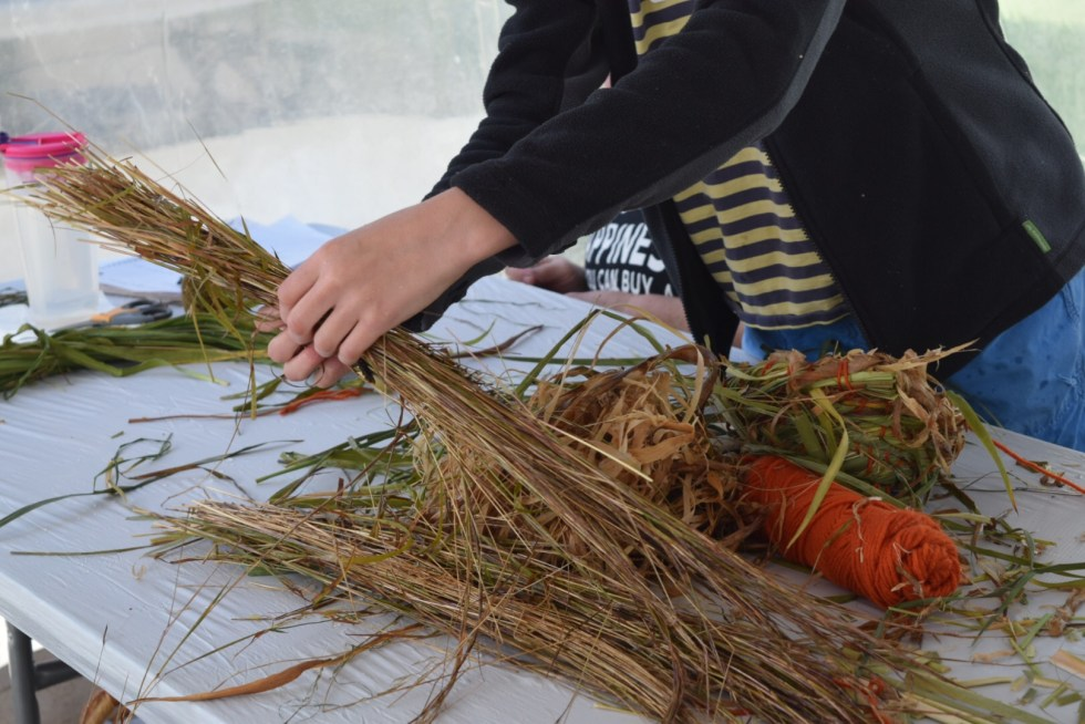 gathering up grasses for a coiled basket