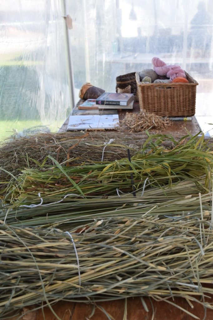 grasses ready to be made into baskets