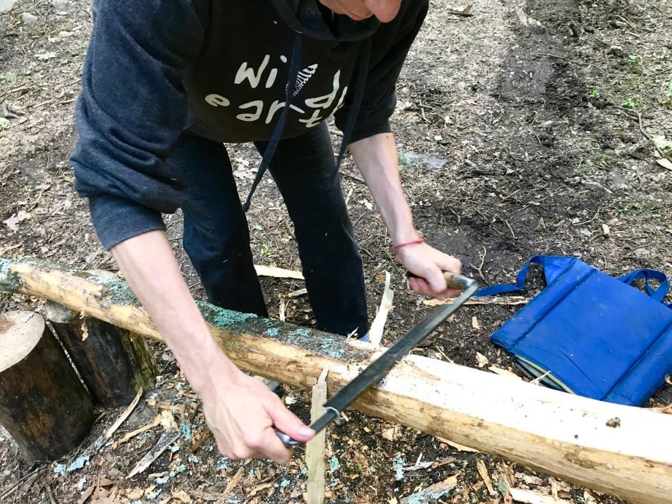 Harvesting basswood bark