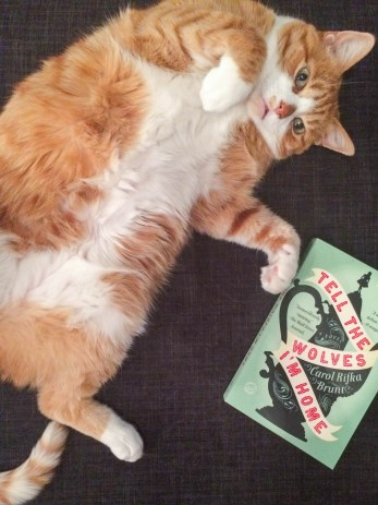 Milo lounges near a copy of Tell the Wolves I'm Home, a novel by Carol Rifka Brunt