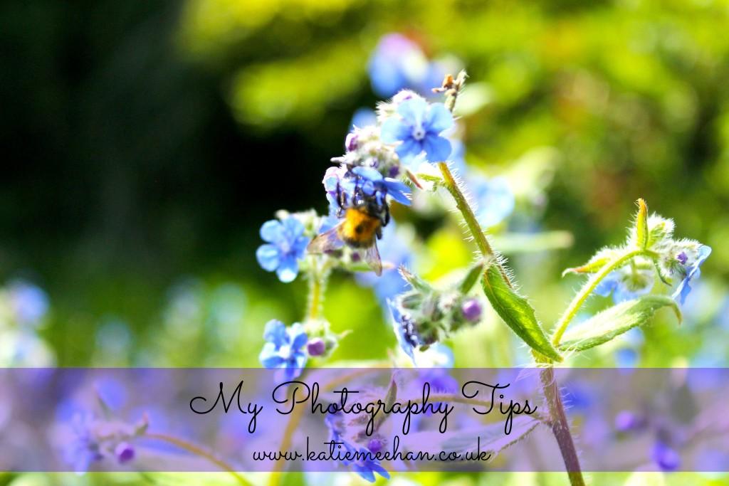 bluebell bee katie meehan