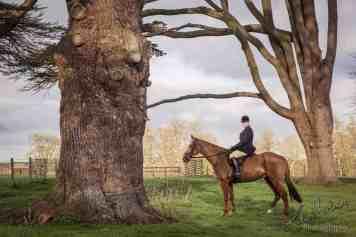 hampshire wiltshire equine portrait photography