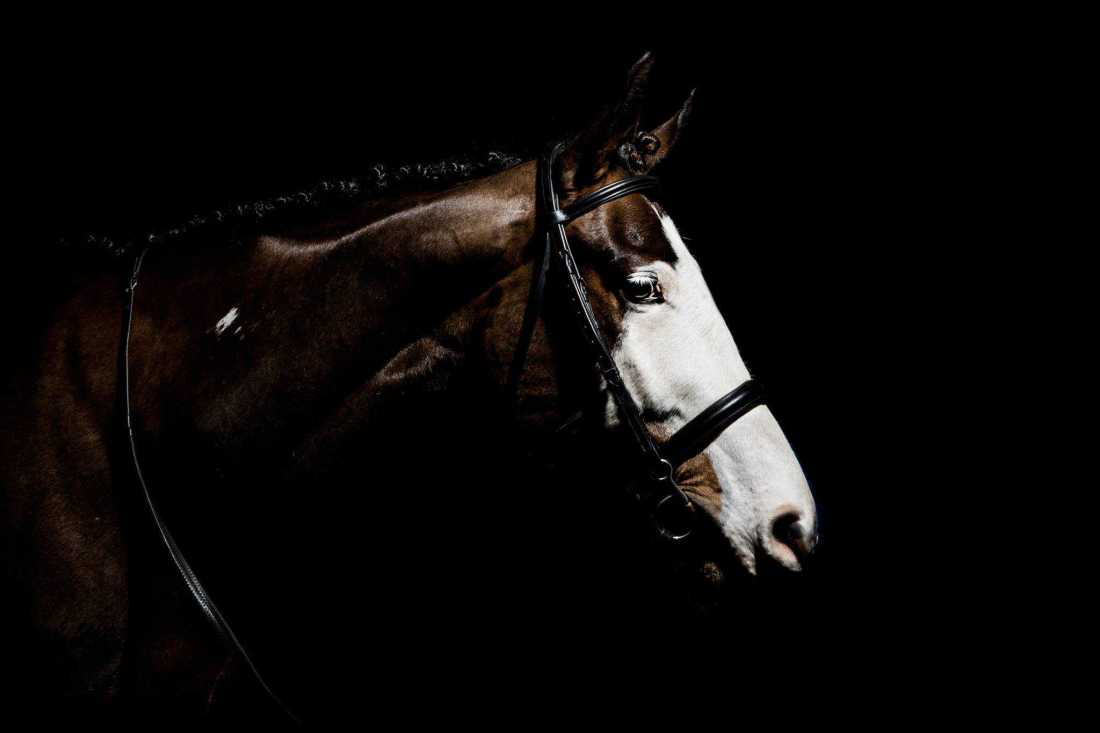 equine photographer black background wiltshire studio lit
