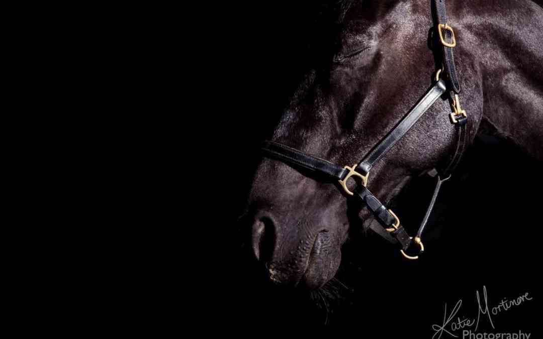 Behind the Magic – Horses & studio lights