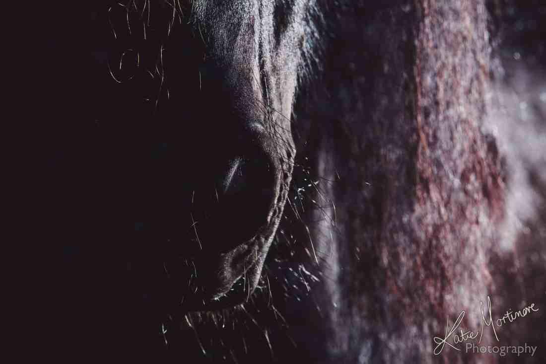 studio lit black background fine art equine print wiltshire hampshire photographer photograph