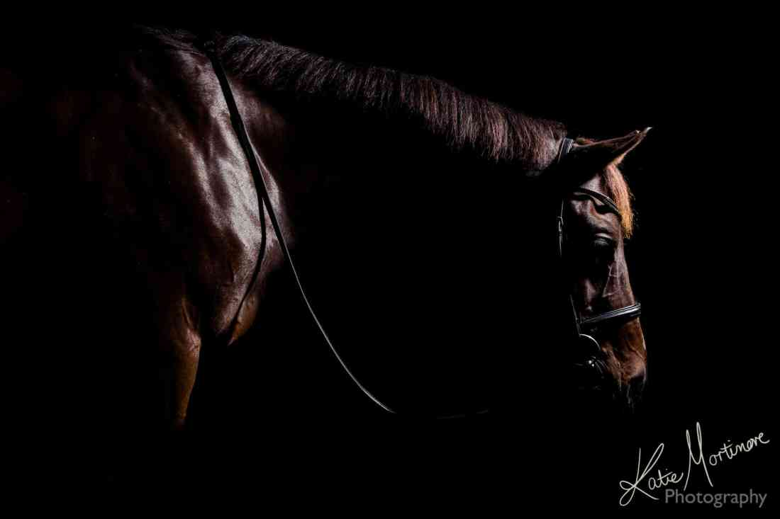 low key black background equine portrait