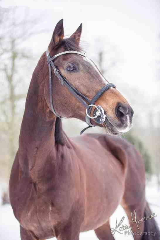 horse snow photoshop