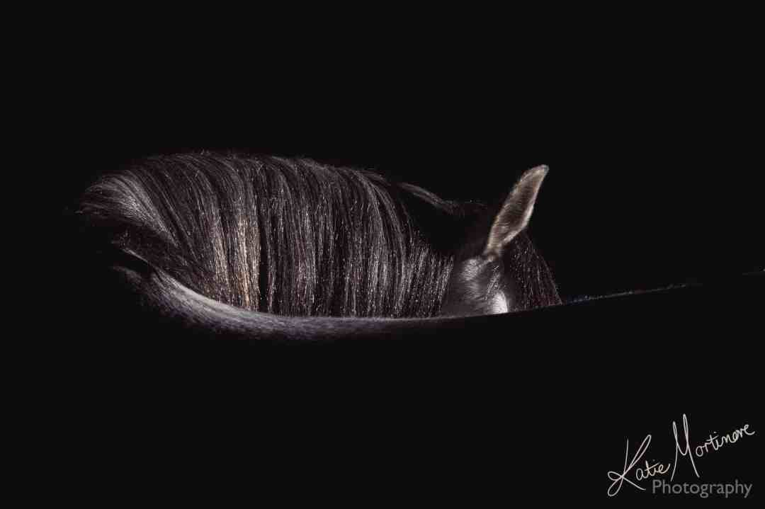 equestrian fine art prints katie mortimore photography