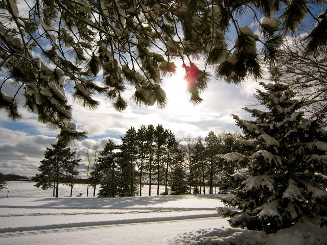 sunny day in winter with pine trees framing view