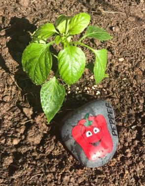 Painted Garden Rock - Red Bell Pepper