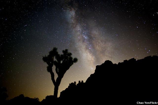 Why I Love Joshua Tree National Park: Milky Way Joshua Tree