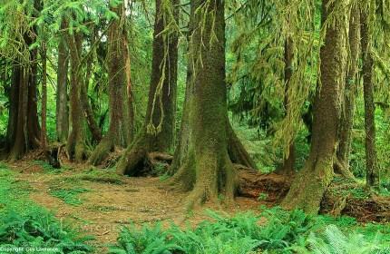 Why I Love Olympic National Park: Nurse Logs