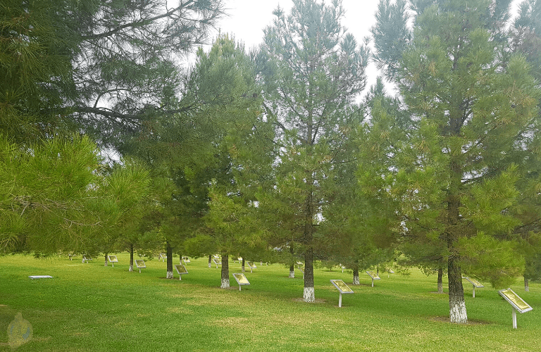 Trees planted by visiting foreign government leaders