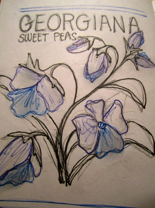 Sketching out the sweet pea