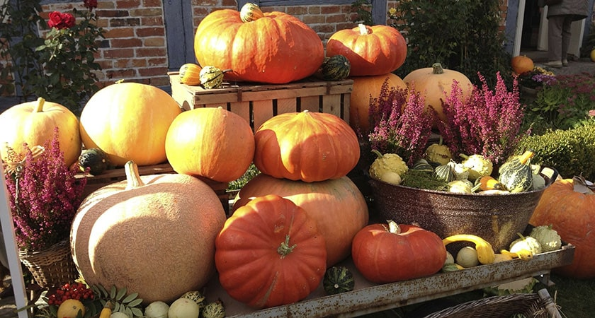 Picking the Perfect pumpkin | Color