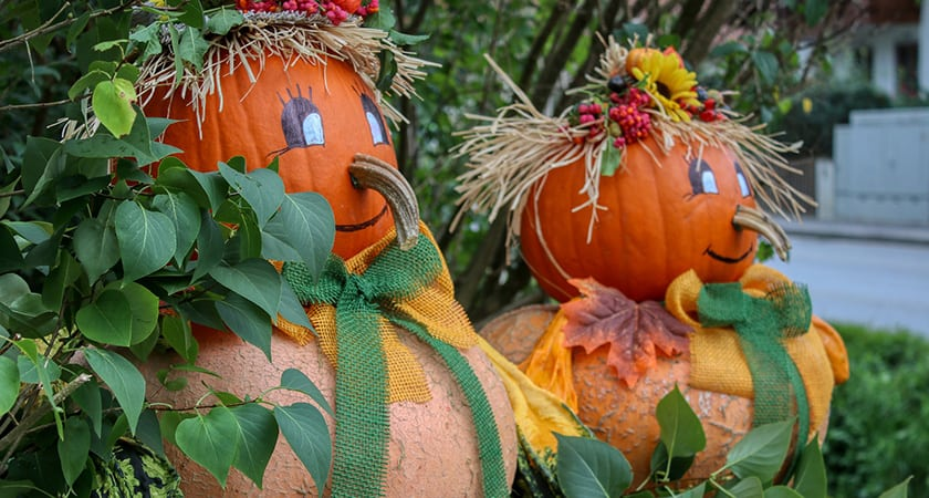 Picking the Perfect Pumpkin | Painting or Carving