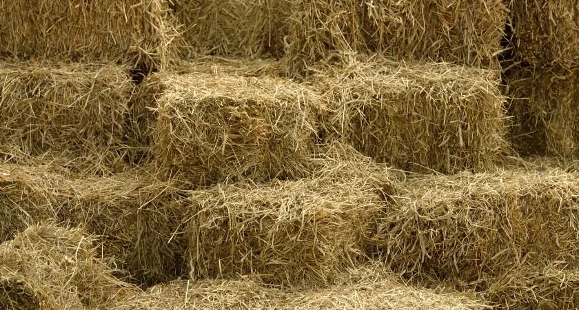 Hay Bale Basics | Square Bale