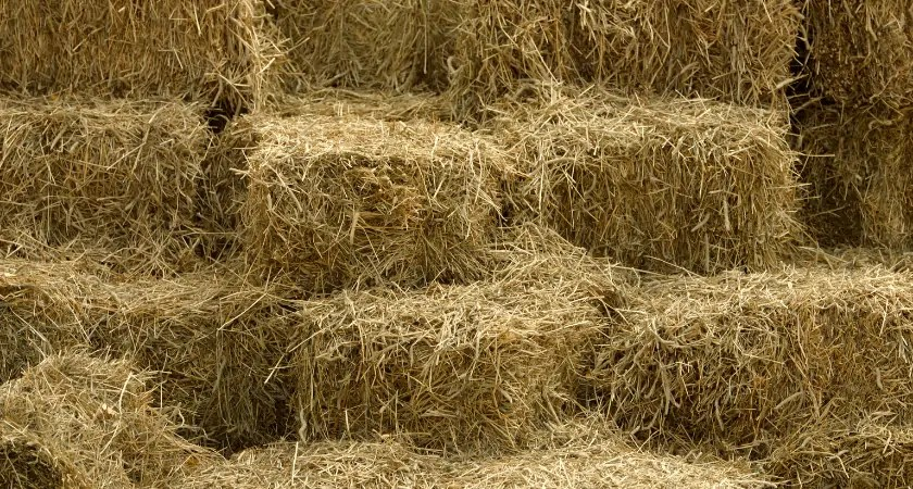 Hay Bale Basics   Square Bale