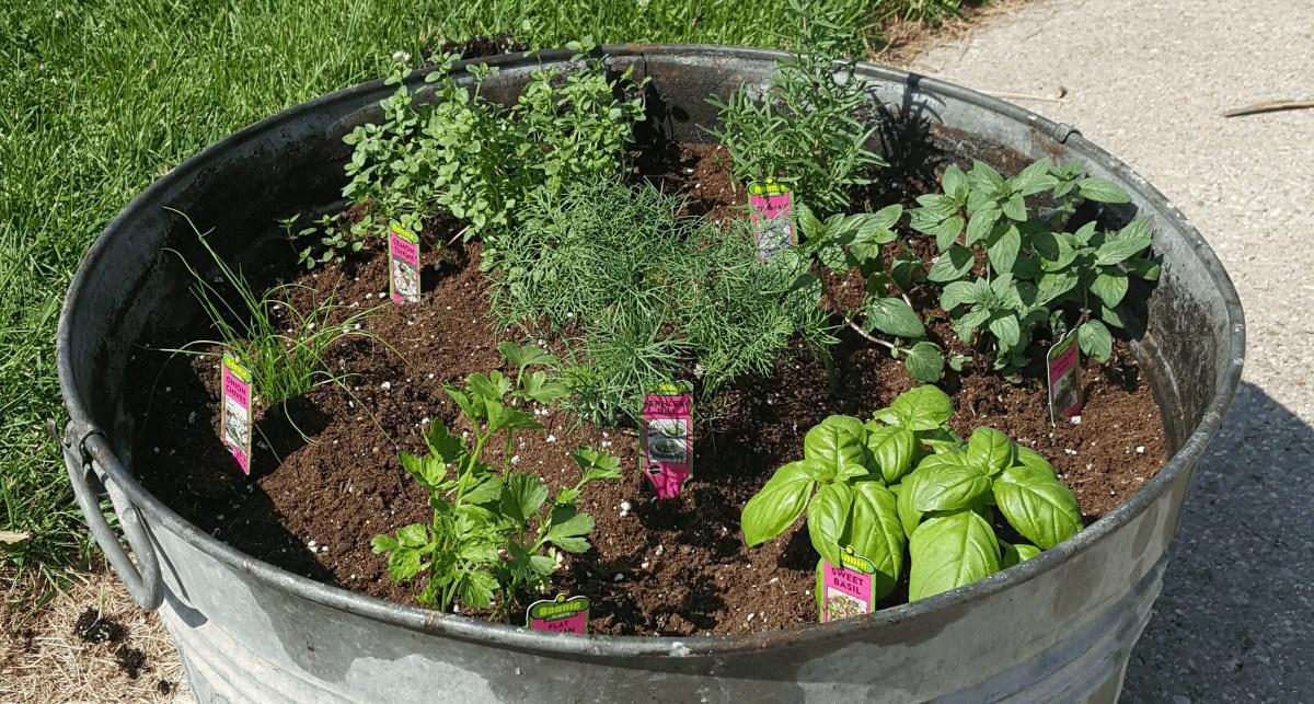 Simple DIY Herb Garden Container