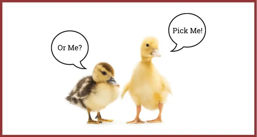Baby Duck Care for Beginners | Pick Me