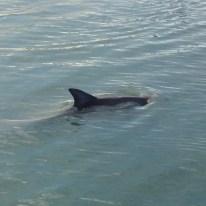 Delfine aus der Nähe - das sieht man unter anderem in Monkey Mia.