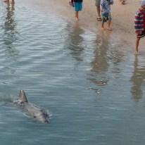 Ohne Scheu schwimmen sie an den Besuchern vorbei