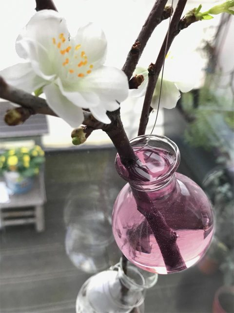 Das Wasser in den kleinen Vasen kann mit roter Beete gefärbt werden.
