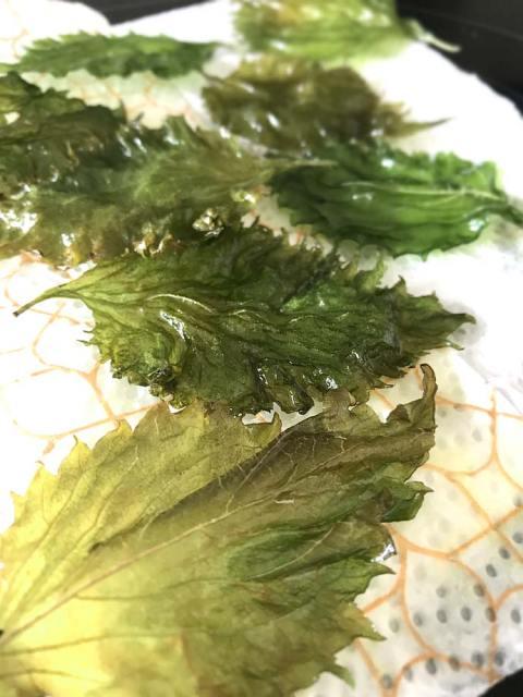 Die frischen Shisoblätter werden nur kurz in Öl frittiert.