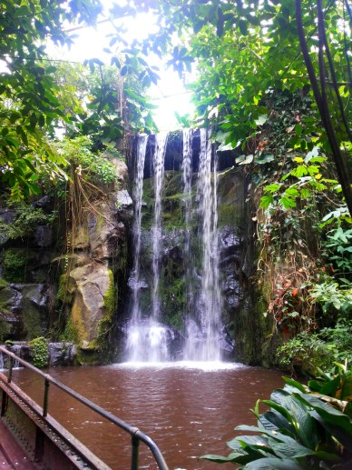 Waterfall in the jungle of Burger's ZOO