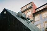 ...seaguls at praça ribeira...