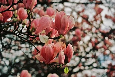 ...spring....