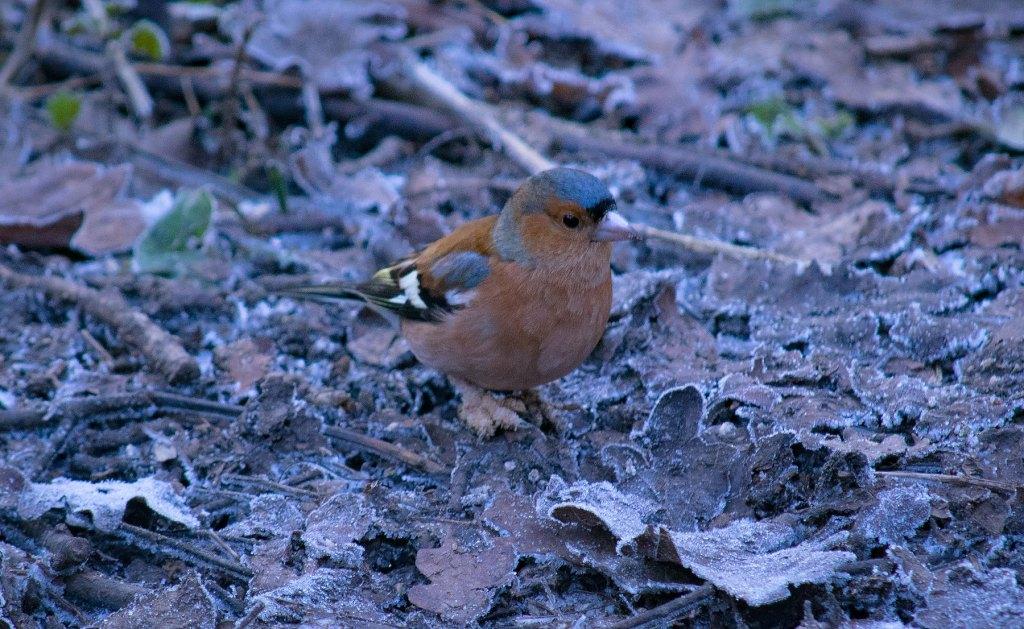 nuthatch at Woodsmill Sussex wildlife trust