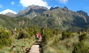 Mountain Rwenzori Hiking Safari Uganda Mountain Rwenzori Hiking Safari Uganda - rwenzori np katona tours 300x180 - 9 Days Mountain Rwenzori Hiking Safari Uganda