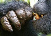 Uganda Primate Safari Bwindi Forest - Kibale Forest 6 Days