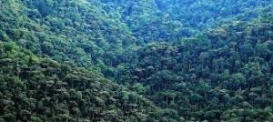 Bwindi Forest National Park Bwindi Forest National Park - bwindi impenetrable forest by katona tours 300x134 - Bwindi Forest National Park – Bwindi Gorilla Forest Uganda