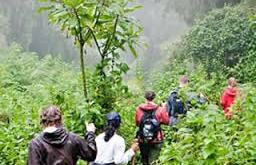 Gorilla Habituation Experience Gorilla Habituation Experience - gorilla habituation by katona tours - Gorilla Habituation Experience in Uganda Bwindi Forest