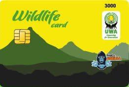 Gorilla Trekking Prices gorilla trekking prices - uganda gorilla permit by katona tours - Gorilla Trekking Prices – Cost of Gorilla  Permits