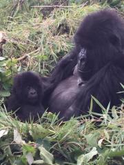 1 Day Gorilla Tour Uganda Mgahinga Park