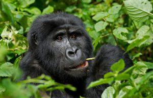 Bwindi Forest Uganda