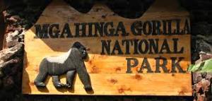 1 Day Gorilla Tour Uganda 1 day gorilla tour uganda - Mgahinga gorilla park by katona tours 300x143 - 1 Day Gorilla Tour Uganda Mgahinga Park