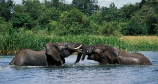 2 Days Murchison Falls Tour  - Murchison falls tour by katona tour - 2 Days Murchison Falls Tour – Ziwa Rhino Tracking