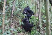 Cheap Uganda Tours and Budget Uganda Safaris packages