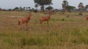 Uganda Tours and Uganda Safaris affordable package